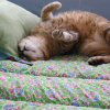 sophiecat5's profile picture